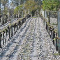 Vignes bio du Château Méric