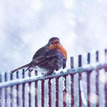 The Sturdy Birdie