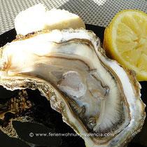 Austern (ostras)