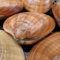 Concha fina, 6,80 EUR/Kg, Juni 2011, Carrefour, Foto: Birgitta Kuhlmey