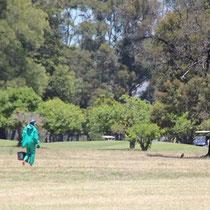 Südafrikanische Golfball Sammelmaschine!