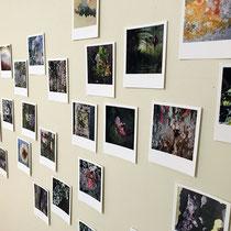 Polaroids LICHENS, Exposition personnelle, Maison du Mont Aigoual, Parc National des Cévennes, 2021