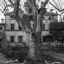 Maquette, Eloge de l'arbre, Château Le Plaisir, Aramon
