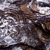 Lichens #2, 2021. Oeuvre originale 60x80cm + tirages numérotés 1-24 + 2 e.a