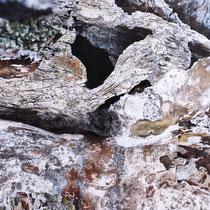 Lichens #4, 2021. Oeuvre originale 60x80cm + tirages numérotés 1-24 + 2 e.a