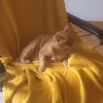 Ein KÖNIGREICH für eine Katze?