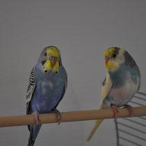 """Meine einstigen Vögel """"Dori"""" und """"Elliott"""""""