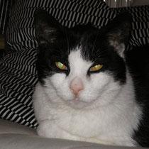 """Meine erste Katze """"Micky"""""""