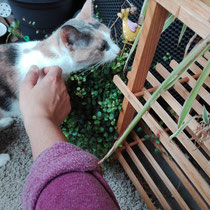 Katze Macsi turnt lieber auf dem Balkon herum *Willkommen bei 7leben-katzensitting*