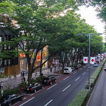 Omotesando is the front approach to Meiji Shrine lined with Zelkova trees and refined shops modeled on Champs-Elysees in Paris.