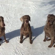 The Weims - Moli, Le Roy & Sharon Louise