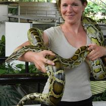 un beau Python de 4kg!!