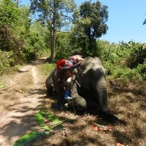 Un paysan propose à Maïlys de monter sur le dos de son éléphant.