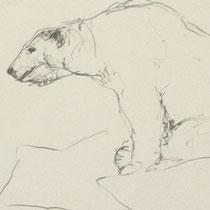 Papier, Zeichnung, Eisbär, Skizze, Bleistift, Kunst