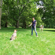 Hunde sind nicht böse, wenn man sie körpersprachlich begrenzt und ihnen zeigt, welchen Raum sie zur Verfügung haben.