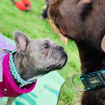 Bei den Ausbildungen und Workshops agieren die Hunde friedlich miteinander.