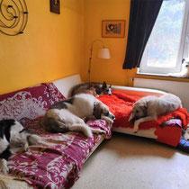 Das Hundewohnzimmer