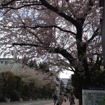 桜満開の日にお届けに上がれました。