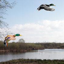 le marais : les étangs communaux