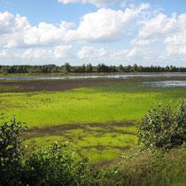 Zum Naturpark Moor gehört auch das Bargerveen in den benachbarten Niederlanden