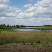 Nach Wiedervernässung breitet sich Torfmoos im Bargerveen aus