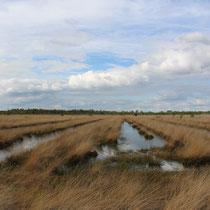 NSG Wesuweer Moor