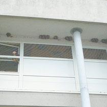 Um Verschmutzungen durch Vogelkot zu vermeiden, wurde von der Hausverwaltung in Lindenthal ein Netz vor Schwalbenestern angebaut. Das stellt eine Straftat dar, da die Nester der Mehlschwalben nach §44 Bundesnaturschutzgesetz ganzjährig geschützt sind.