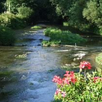 Rivière à truite en Argonne