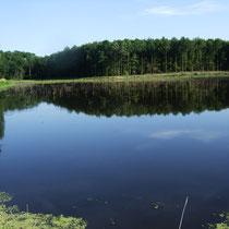 Lac en Argonne - Plonger dans un cadre forestier