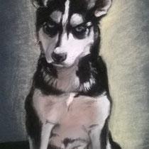 Portrait de chiot Husky