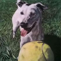 Portrait de Jack Russel blanc