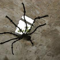 Gloria Pemler-Starck: Tarantula