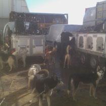 Die Hunde sind auf dem Freideck stationiert