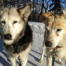 Lea und Nuluk sind auch dabei, und geniessen die Spaziergänge.
