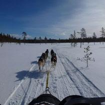 Hier haben wir uns verfahren (im Neuschnee, keine Spur, plötzlich keine Wegmarkierungen mehr), also mittels GPS einigermassen die Richtung halten, bis wir wieder auf einen neu gespurten Trail stossen  :-)