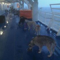 Fähre von Travemünde nach Helsinki: Fütterung der Raubtiere