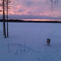 Abendstimmung in der Saija-Lodge: Katay geniesst den Spaziergang