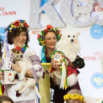 Participation in the Parade of Embroidery, 3rd place winner. FCI CACIB CRYSTAL CUP 2015, Kiev, Ukraine. December 6`2015.