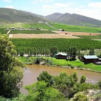 Robertson Wine Area Weltevrede