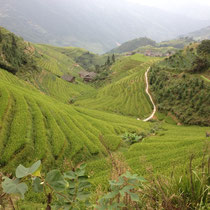 Chine - les rizières