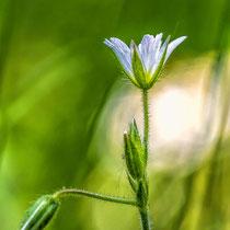 Nur eine kleine Blüte