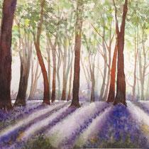 le sous bois violet