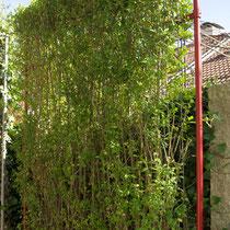 Ligusterhecke - Mobilane Fertighecke® - Pflanzfertige Heckenelemente - Fertiger Sichtschutz - Garten Bronder©