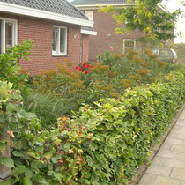 Rotbuchenhecke - Mobilane Fertighecke® - Pflanzfertige Heckenelemente - Fertiger Sichtschutz - Garten Bronder©