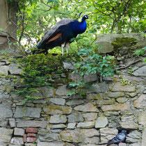 1. Die Vögel