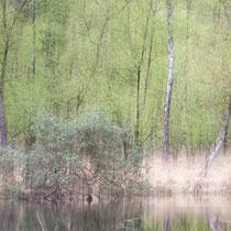 """Leicht abstrakte Darstellung """"im Heidemoor"""""""