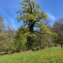 «Ausfliegen mit Gimpel», Kulturlandschaft Maienfeld, Mai 2021