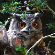Eule im Wildpark - Foto: Dieter Bauer