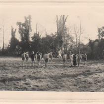 camp scout château du Londel