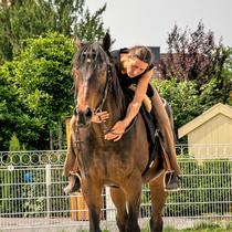 Ausbildung von traumatisierten Pferden